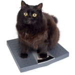 flea meds for cats the best one